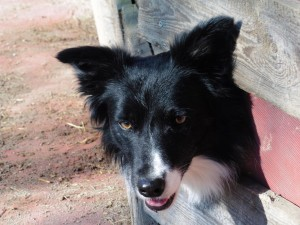 Hund-Lucky